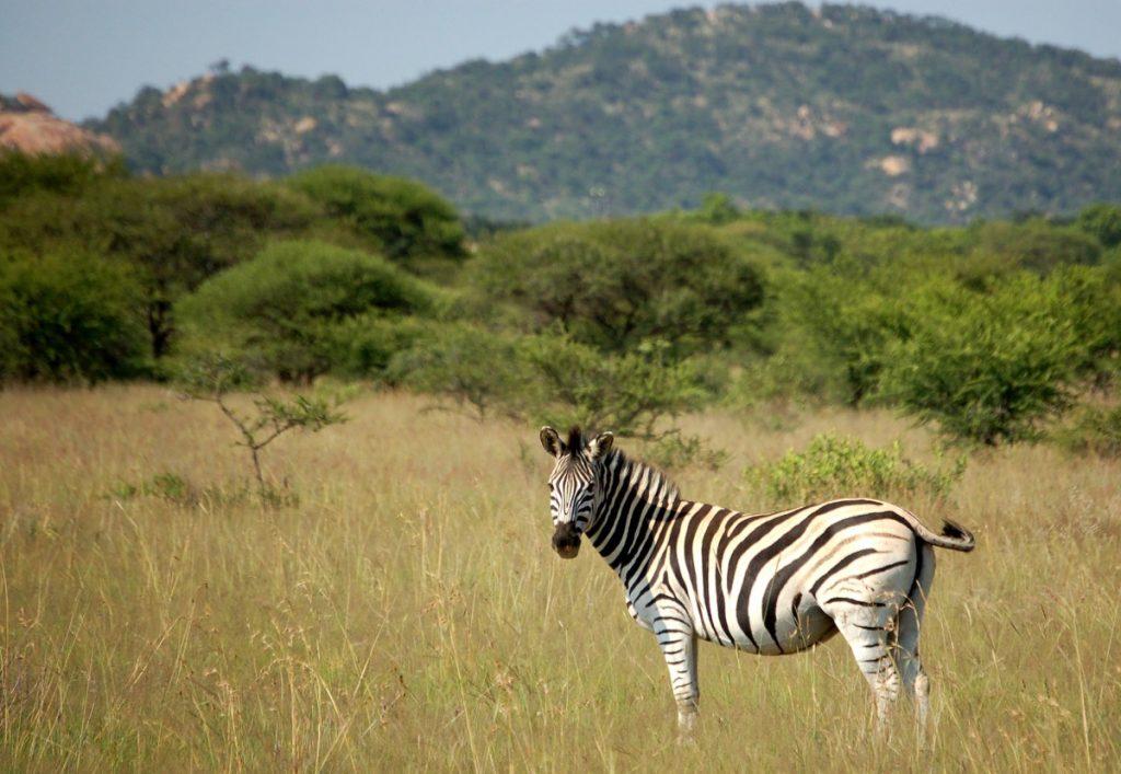 south-africa-kruger-national-park-3